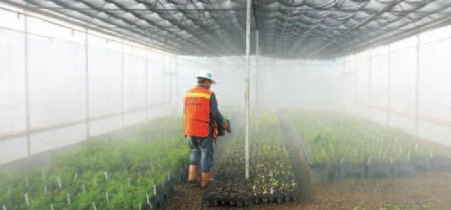 PT Inco's 2.5 hectare nursery is the largest facility of its kind in Indonesia